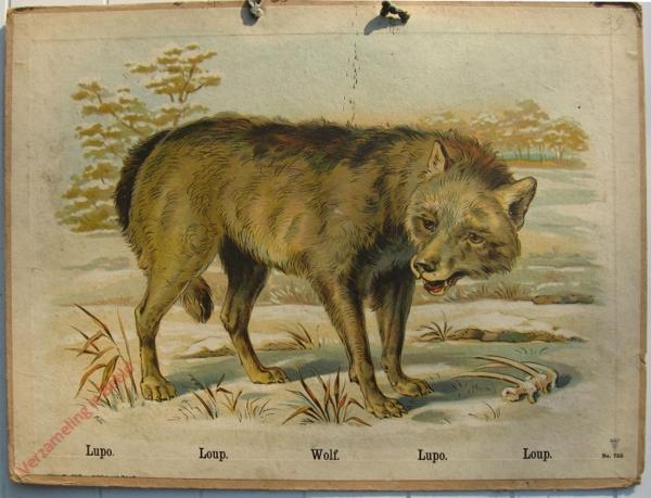 755 - Lupo, Loup, Wolf, Lupo, Loup